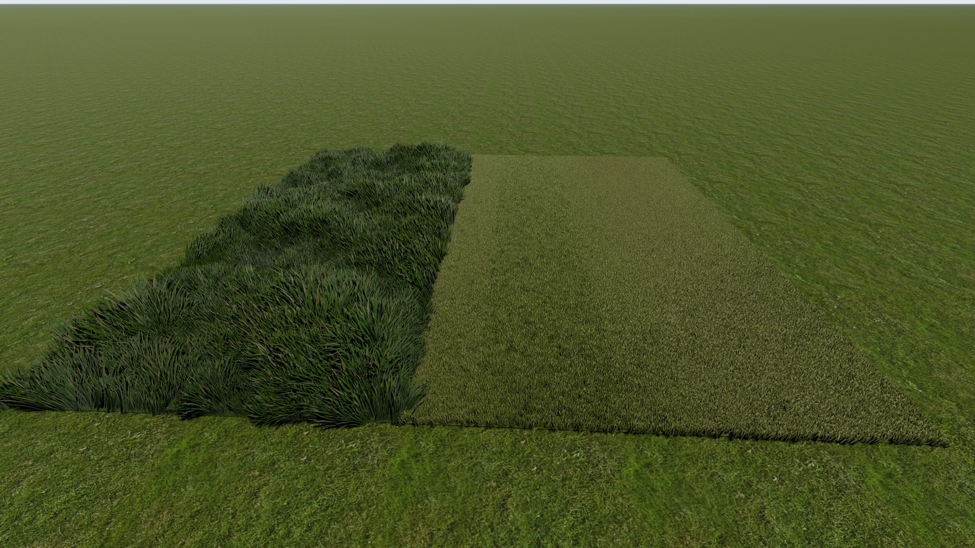 grass - rough and cut together.jpg